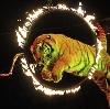 Цирки в Кронштадте