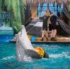 Дельфинарии, океанариумы в Кронштадте