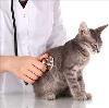 Ветеринарные клиники в Кронштадте